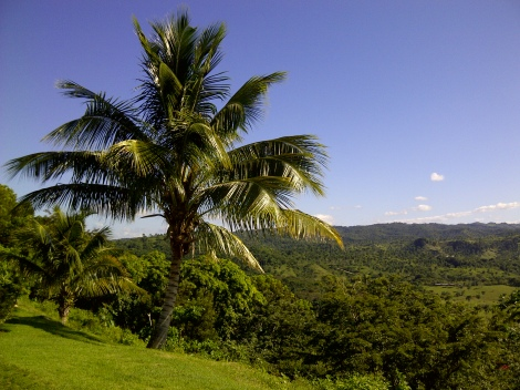 coconut_palm_cliff