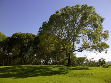 shadow_tree
