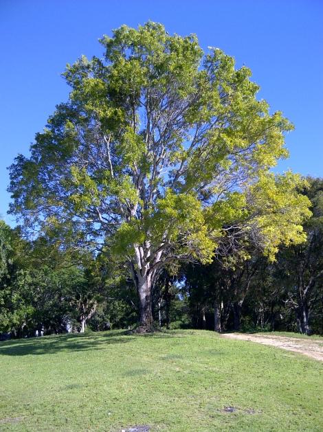 sunny_tree