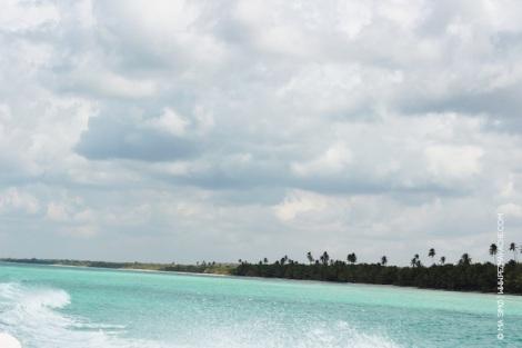 mia_simo_pezmapache_isla_saona_dominican-1033